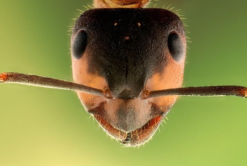 The Giant Ant – An Amazing Fiction Story