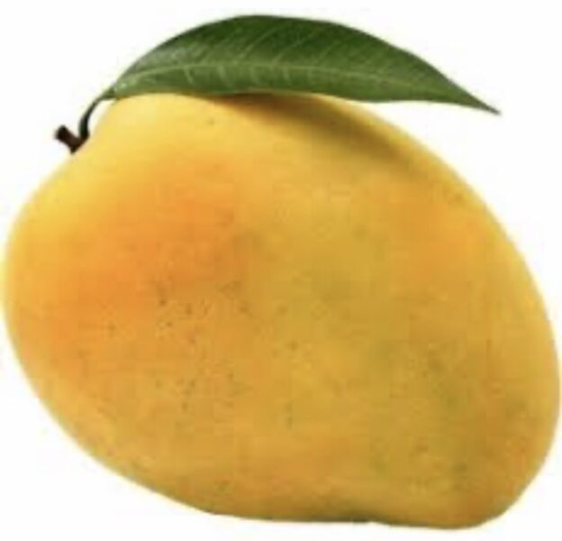 Mango prices go down as summer going to end with start of rainfall